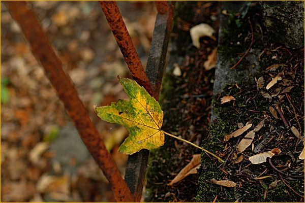 Autumn leaf .II